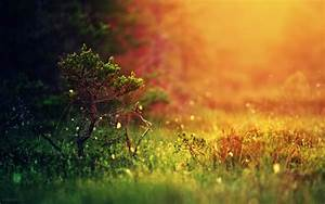 Landscape, Depth, Of, Field, Grass, Blurred, Nature, Trees, Colorful, Simple, Background, Wallpapers