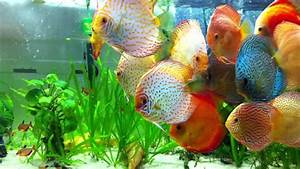 Planted Discus tank - YouTube