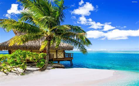 Bora Bora Hd Wallpaper Lato 426 Tropiki Dom Palmy Plaza Ocean Tapety Na Pulpit