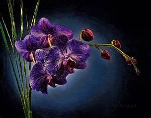 Dark Purple Orchids – savingourboys.info