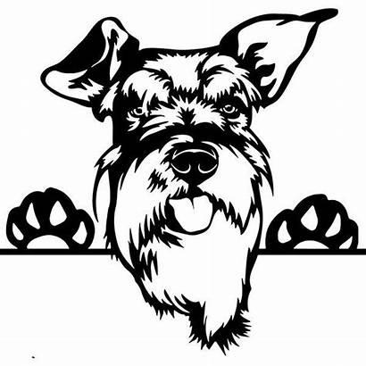 Schnauzer Peeking Dog Smiling Decal Happy Drawing