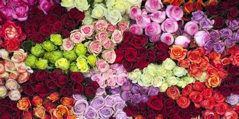 different color roses 14 color meanings what do the colors of roses