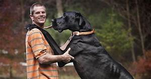 Zeus, The World's Tallest Dog Ever, Dies at Age Five - NBC ...