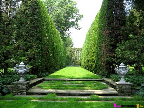 privacy planting small yard backyard privacy plants blog hedge shrub privacy fence wall masonry ideas backyard
