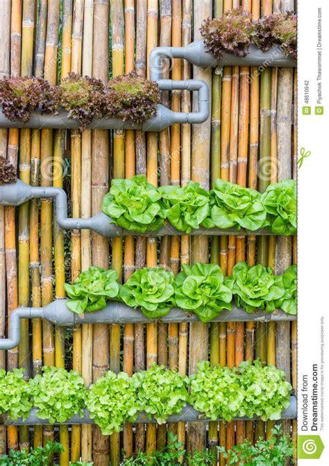 17 Meilleures Idées à Propos De Jardinage Hydroponique Sur