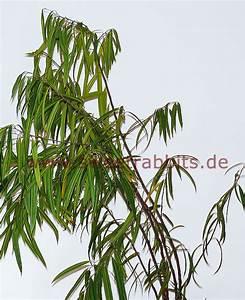 Ficus Benjamini Verliert Alle Blätter : giftige zimmerpflanzen f r kaninchen haustiere ~ Lizthompson.info Haus und Dekorationen