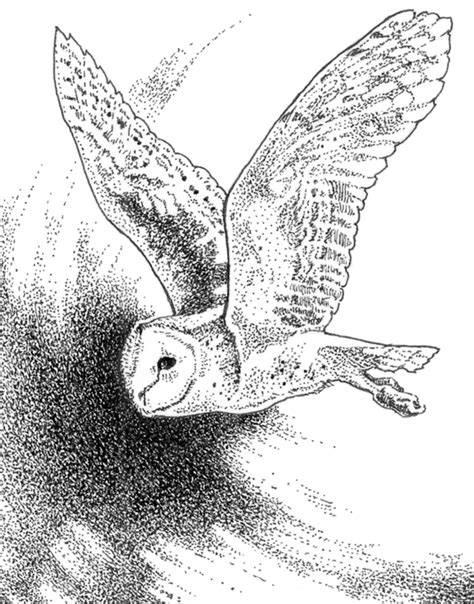 flying barn owl drawing free coloring pages of flying owl