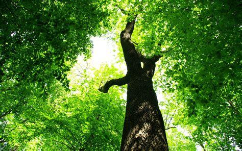 Green Tree Hd Wallpaper by Green Tree Jungle Hd Desktop Wallpapers 4k Hd
