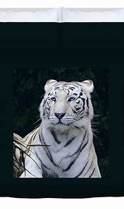Blue Eyed White Bengal Tiger Duvet Cover for Sale by ...