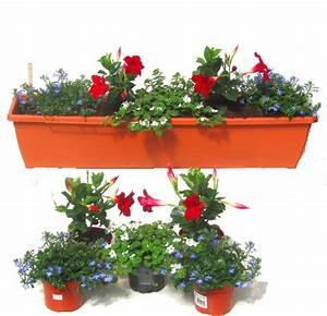 Sommerblumen Für Schatten : balkonpflanzen set f r balkonk sten 80 cm lang sommer ~ Michelbontemps.com Haus und Dekorationen