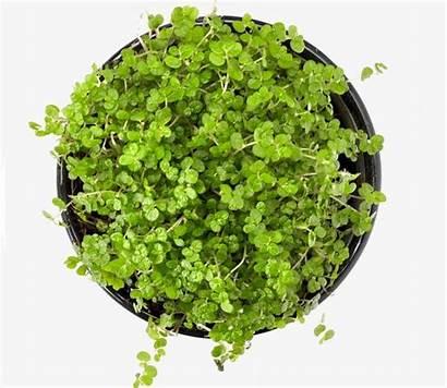 Photoshop Furniture Plants Potted Pot Plant Plantas