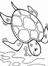 Turtle Coloring Sea Pages Printable Cartoon Deep Turtles Drawing Printables Diving Deeper Diver Colouring Print Box Getcolorings Baby Getdrawings Templates sketch template