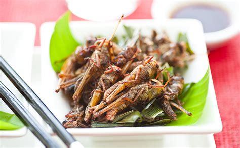 cuisine futur 7 seriously farmed bugs modern farmer