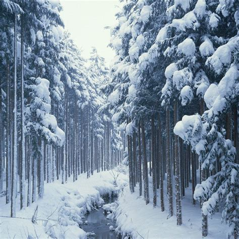Free Winter Wallpaper For Ipad