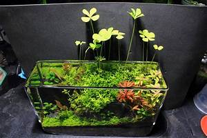 Petit Aquarium Design : low tech filterless tank tank ideas shrimp tank ~ Melissatoandfro.com Idées de Décoration