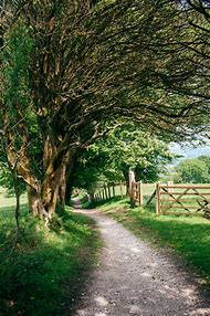 Country Roads and Path Scenery