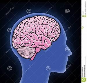 Illustration Of Human Brain Stock Illustration