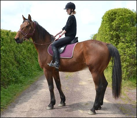 vente de chevaux trotteur fran 231 ais cheval