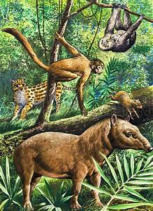 Amazon Rainforest Animals Collage There Are Four Species ...