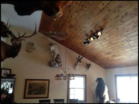 spotlights  trophy rooms