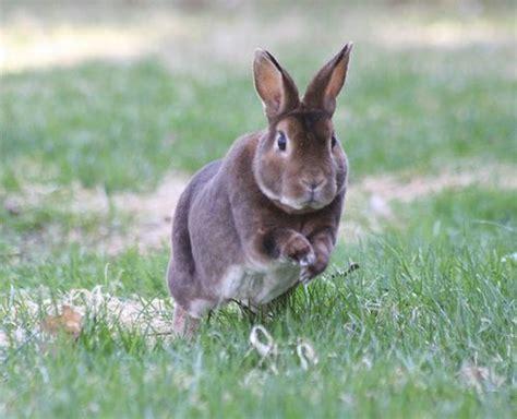 hopping bunny hopping the bunny trail