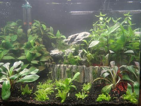 forum gt message gt d 233 butant mon nano aquarium 60l aquabase org