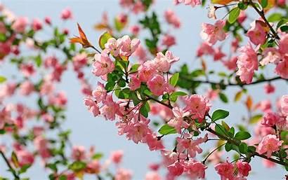 Flower Wallpapers Flowers Desktop Backgrounds Begonia 1280