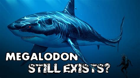 megalodon  exists  evidence  theory