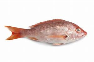 Healthy Kosher Fish Options | The Luxury Spot
