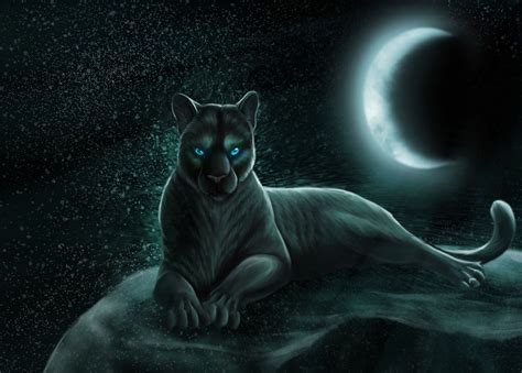 Panther Animal Wallpaper - panther animal wallpaper other animals wallpapers