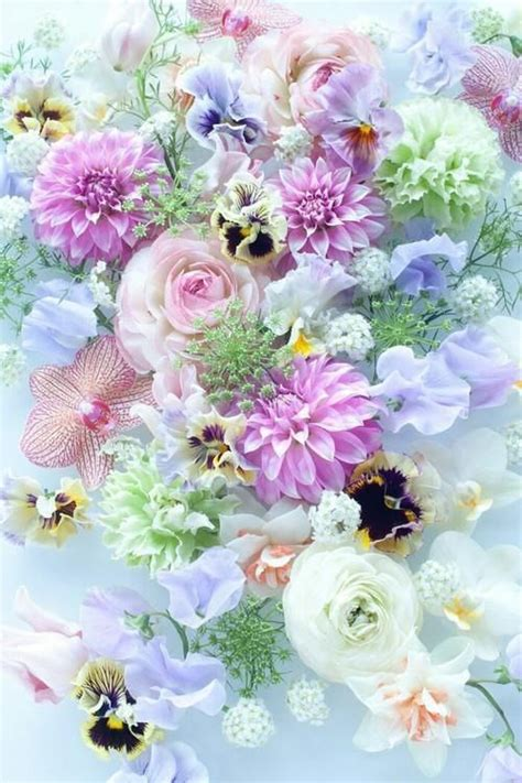 pretty pastel flowers pictures   images