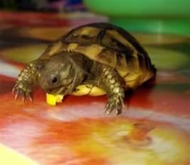Baby Turtles Eating