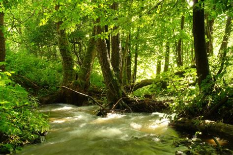 natur verstehen nationalpark kellerwald edersee