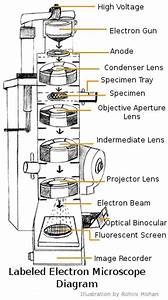 Electron Microscope Labeled Diagram