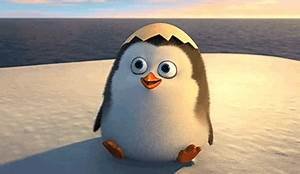 Madagascar Penguins GIFs - Find & Share on GIPHY