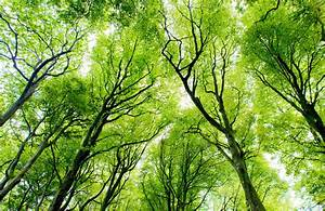 Green Forest Canopy Wallpaper