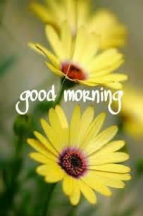 Good Morning Ladybug