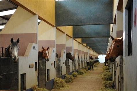 pferdeboxen selber bauen das sollten sie beachten