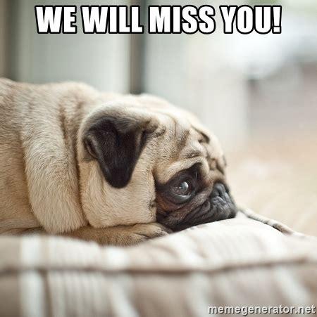 I Will Miss You Meme - we will miss you miss you pug meme generator