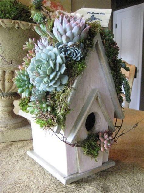 creative indoor  outdoor succulent garden ideas