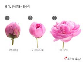 flower bouquet pictures how peonies are shipped flower muse
