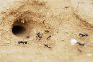 Ameisen Im Rasen Wirksam Bekämpfen : ameisen im sandkasten so vertreiben sie sie erfolgreich ~ Whattoseeinmadrid.com Haus und Dekorationen