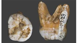 DNA in Tooth Yields New Insight Into Ancient Human Cousin ...