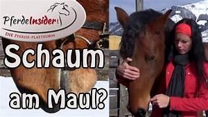 Was Bedeutet Max : was bedeutet schaum am pferdemaul youtube ~ Lizthompson.info Haus und Dekorationen