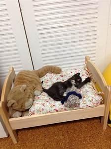 Lit Chez Ikea : des japonais amoureux de chat utilisent un lit pour poup e ~ Teatrodelosmanantiales.com Idées de Décoration