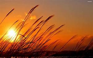 Colorful Sunset Over Wheat Field wallpapers (32 Wallpapers ...