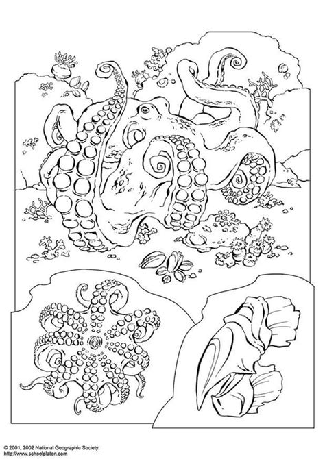 Octopus Kleurplaat by Kleurplaat Octopus Afb 3071 Images