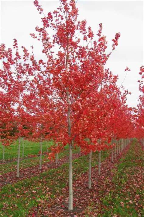 tree nurseries in wisconsin thenurseries