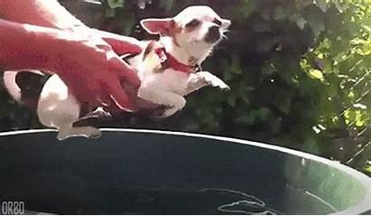 Dog Funny Gifs Animated Swimming Dogs
