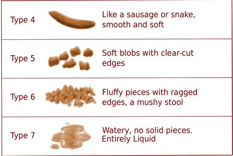 Fecal Chart Images Reverse Search
